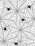 Ragni nel Web Immagine Stock