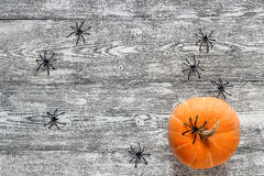 Ragni neri decorativi e piccola zucca sul dipinto di legno Fotografie Stock Libere da Diritti