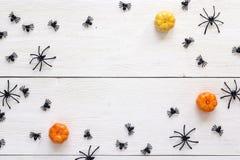 Ragni neri decorativi e piccole zucche sul verro di legno bianco Fotografie Stock Libere da Diritti