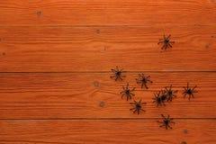 Ragni neri decorativi sui bordi di legno arancio Copi lo spazio Fotografie Stock