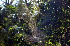 Ragno che appende sulla ragnatela Fotografia Stock