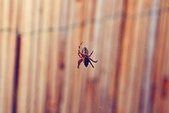 Ragno che mangia un insetto 2 Immagini Stock Libere da Diritti