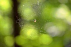 Ragno che si siede su un cobweb Fotografia Stock Libera da Diritti