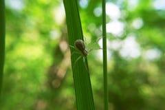Ragno di Brown che striscia sulla pianta verde Fotografia Stock Libera da Diritti