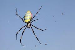 ragno di Dorato-web Immagini Stock Libere da Diritti