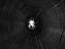 Ragno di notte nel centro del web Fotografia Stock