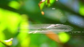 Ragno di ragnatela che prende la luce solare Bokeh Backgroung di mattina video d archivio