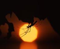 Ragno di Sun Fotografie Stock Libere da Diritti