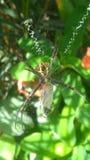 Ragno e farfalla Fotografia Stock Libera da Diritti