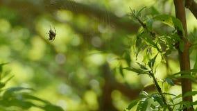 Ragno e formiche in foresta stock footage