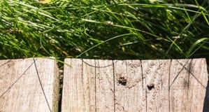 Ragno e la sua preda sulla plancia di legno animale, fondo fotografie stock