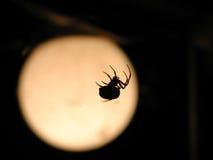 Ragno e luna Fotografia Stock