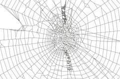 Ragno e ragnatela Immagine Stock