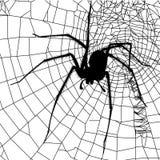 Ragno e ragnatela Immagine Stock Libera da Diritti