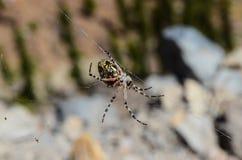 Ragno e web fotografia stock