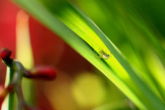 Ragno in giardino Fotografia Stock Libera da Diritti