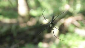 Ragno nella foresta della palma video d archivio