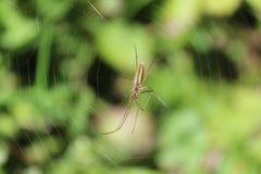 Ragno su spidernet fotografia stock
