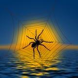 Ragno su un Web di ragno Fotografia Stock
