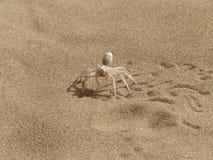 Ragno su una sabbia. Immagine Stock