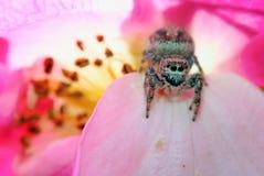 Ragno sul fiore fotografia stock