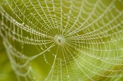 Ragno sul Web Fotografie Stock Libere da Diritti