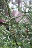 Ragno sul web dopo la pioggia fotografia stock libera da diritti