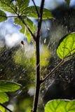 Ragno sul web in more Fotografia Stock Libera da Diritti