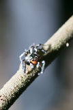 Ragno sull'albero Immagini Stock Libere da Diritti