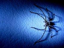 Ragno sulla parete Immagine Stock