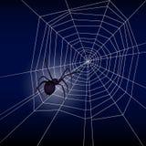 Ragno sulla rete del ragno Fotografia Stock Libera da Diritti