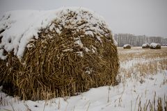 Rags-rolls of hay on the snow-covered field Stock Images