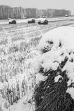 Rags-rolls of hay on the snow-covered field Stock Image