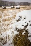 Rags-rolls of hay on the snow-covered field Royalty Free Stock Image