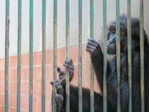 Ragunan-Zoo, Jakarta Stockfoto