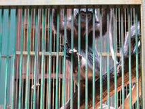 Ragunan-Zoo, Jakarta Stockfotos