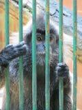 Ragunan-Zoo, Jakarta Lizenzfreie Stockbilder