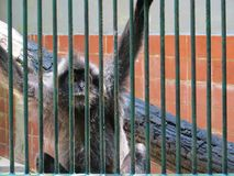 Ragunan-Zoo, Jakarta Lizenzfreie Stockfotos