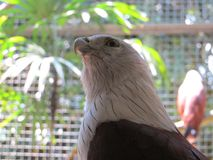 Ragunan-Zoo, Jakarta Lizenzfreies Stockbild