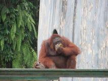 Ragunan-Zoo, Jakarta Stockbilder