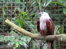 Ragunan-Zoo, Jakarta Lizenzfreies Stockfoto