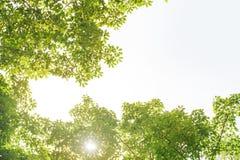 Rahmen des grünen Urlaubs mit Sonnenlicht Stockbilder