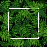 Rahmen des weißen Quadrats auf tropischen Blättern, Farnbetriebsvektor stockbilder
