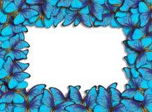 Rahmen mit Schmetterlingen Morpho vektor abbildung