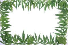 Rahmen von den Blättern eines Hanfs Lizenzfreie Stockbilder
