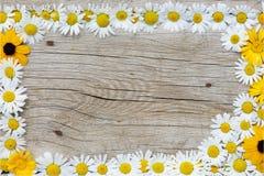 Rahmen von den camomiles Stockbilder