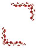 Rahmen von den rosafarbenen Knospen der Blumen. Lizenzfreies Stockbild
