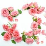 Rahmen von den Rosen auf weißem Hintergrund Flache Lage, Draufsicht Stockfotos