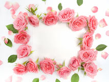 Rahmen von den Rosen auf weißem Hintergrund Flache Lage, Draufsicht Lizenzfreie Stockfotografie