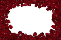 Rahmen von den roten rosafarbenen Blumenblättern lokalisiert Stockfotografie